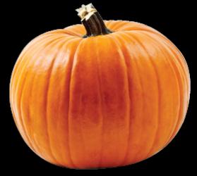 Schaefers Collins Pumpkin Patch